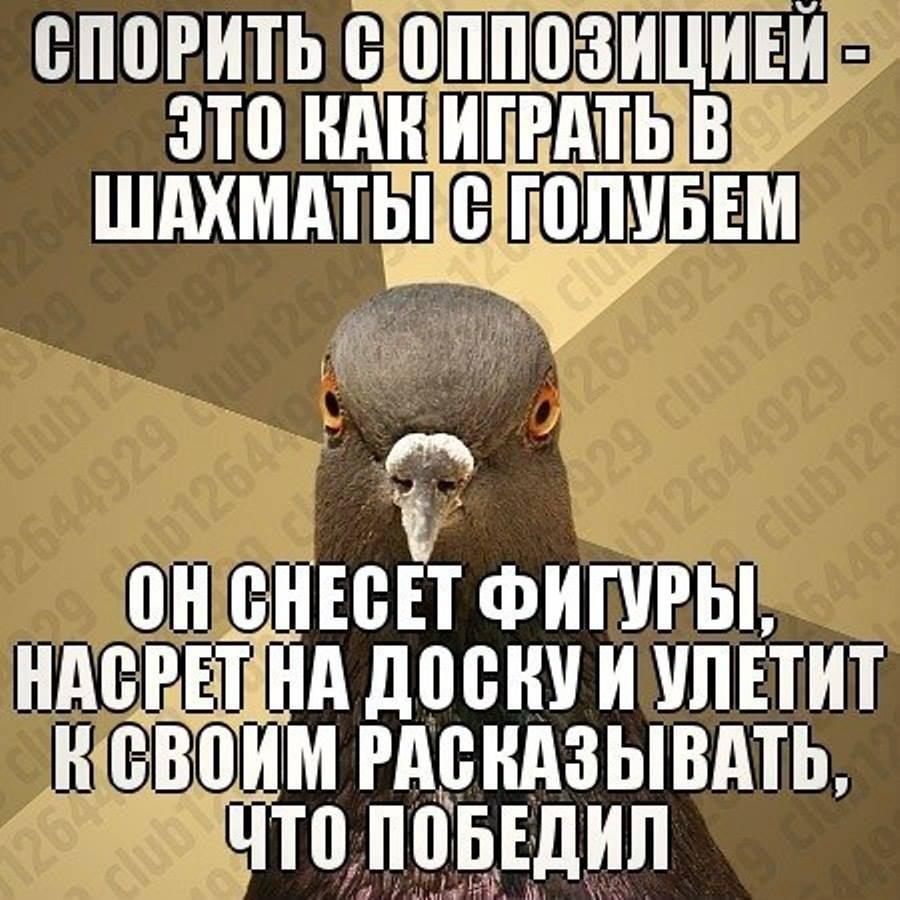 1479404_550183061725071_870347601_n.jpg